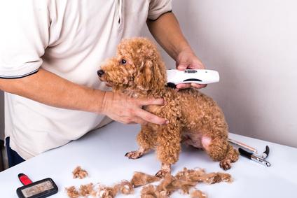Vergleich von Hundeschermaschinen für den privaten Gebrauch