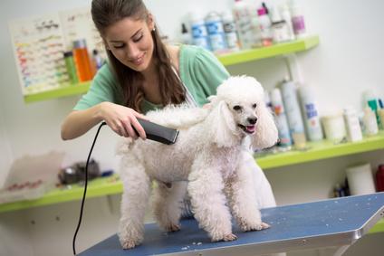 Professionelle Hundeschermaschine im Einsatz