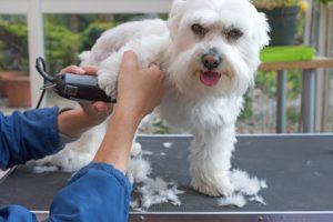 5 Anfängertipps die dir das Hundescheren erleichtern