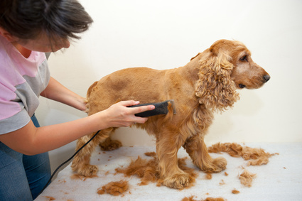 Ratgeber Hundescheren