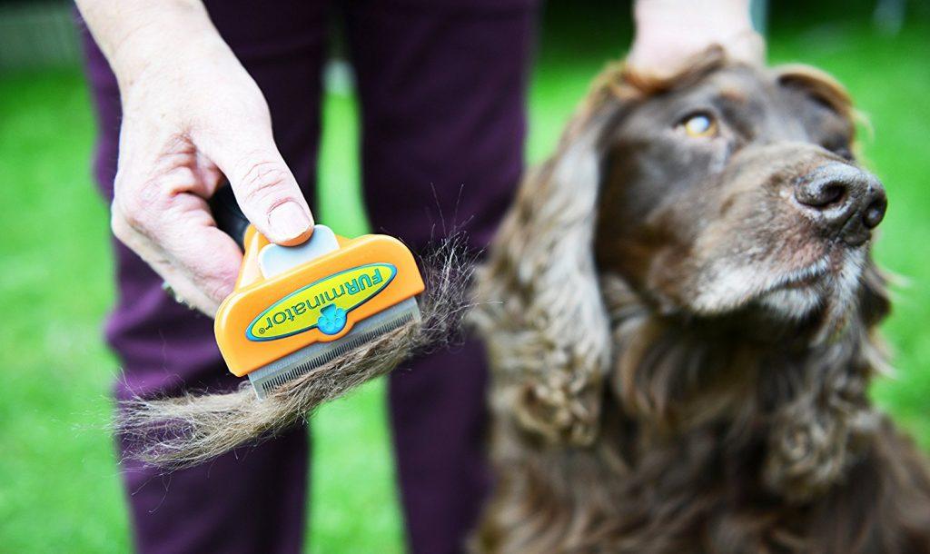 Mit dem Furminator die Unterwolle deines Hundes ausbürsten